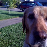 Bourbon and I on our front lawn on Twitpic