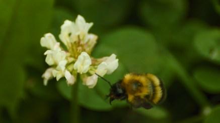 low bee