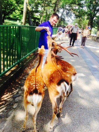 Surrounded by Deer at Nara Park