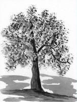P_The Old Oak Tree
