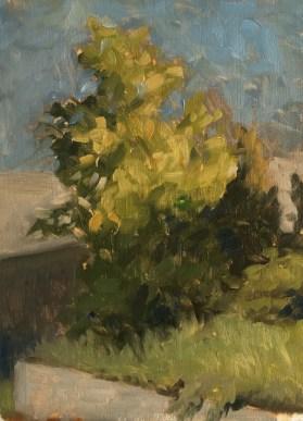 "Tree Sketch : Oil on wood. 6""x8"" 2016"