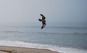 Seagull Abatememnt