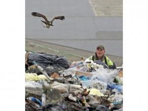 Landfill- Peter