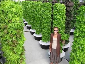 Vertical farms 2nd tier consciousness
