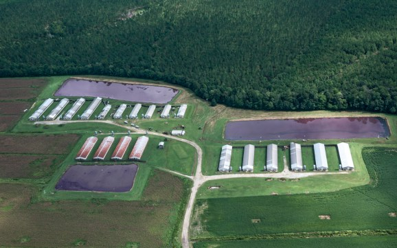 Pig waste is stored in huge lagoons like these, some bigger than a football field, in eastern North Carolina.