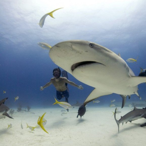 Rob Stewart free diving with Caribbean reef sharks. Freeport Bahamas. Photo: Veruschka Matchett