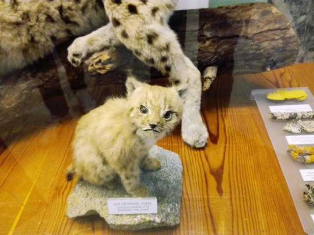 muzeum tanapu tatranska lomnica region tatry poprad presovsky kraj severovychod slovensko