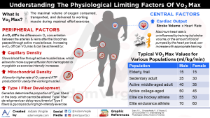 Understanding the Physiological Limiting Factors of VO2 Max