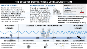 Body Composition in Sport: Ultrasound