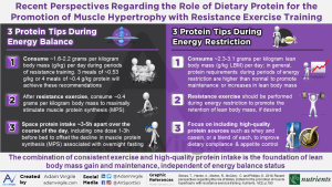 Recent Perspectives Regarding the Role of Dietary Protein for the Promotion of Muscle Hypertrophy with Resistance Exercise Training