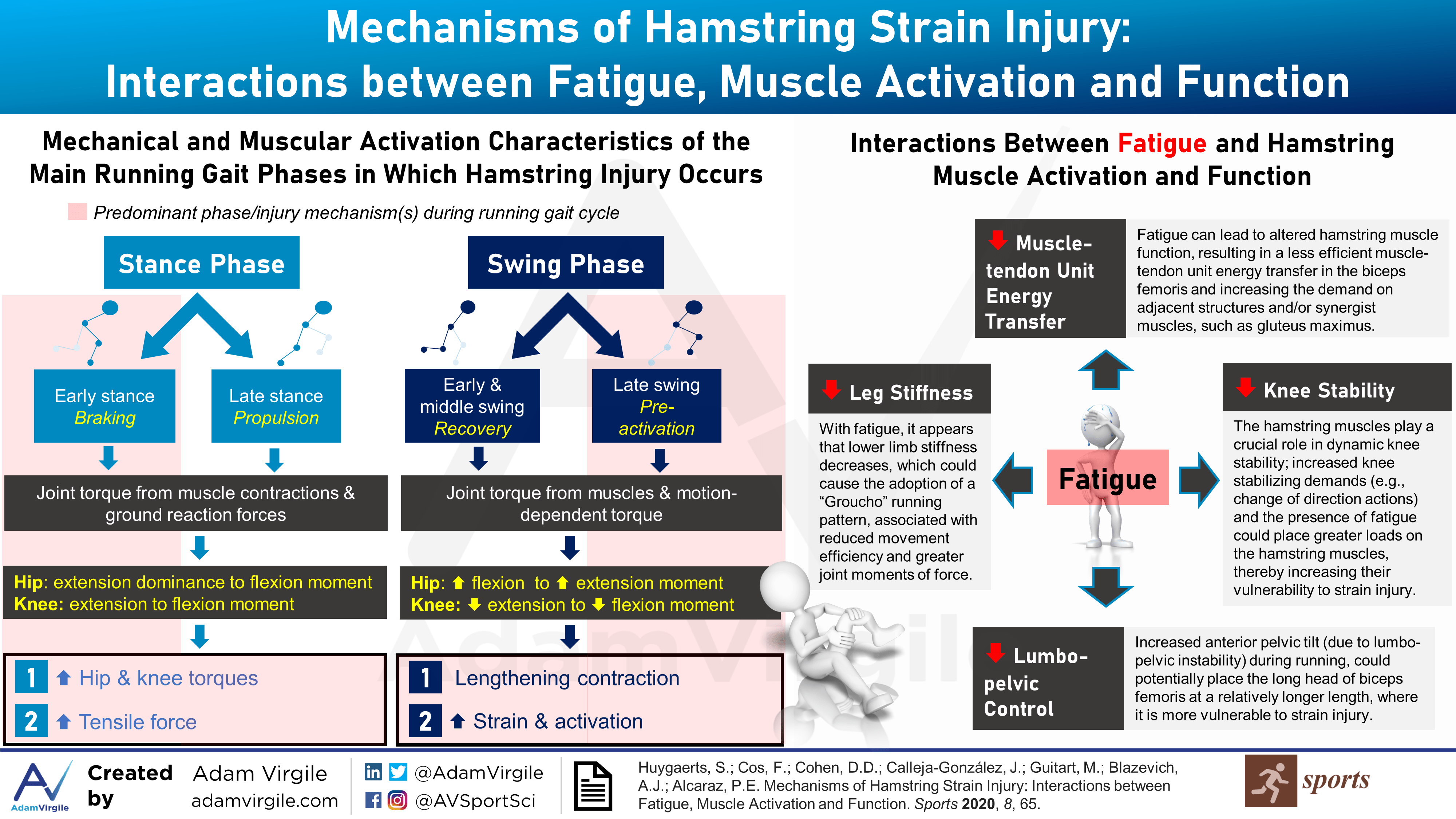 Mechanisms of Hamstring Strain Injury: Interactions between Fatigue, Muscle Activation and Function