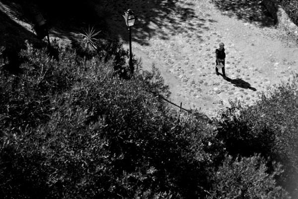 entre árvores e sombras