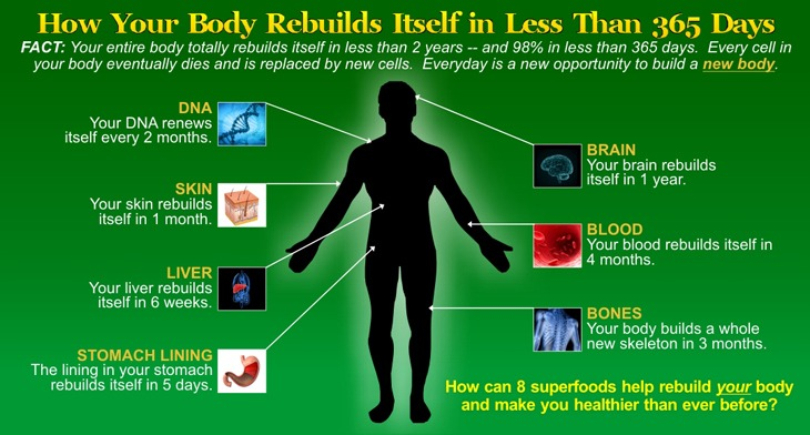 How your body rebuilds itself