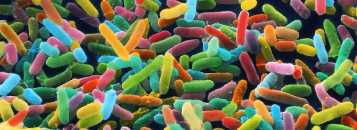 Microbiome