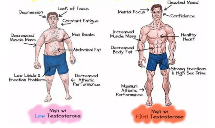 Low Testosterone impacts