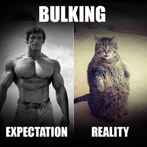 Reality of Bulking