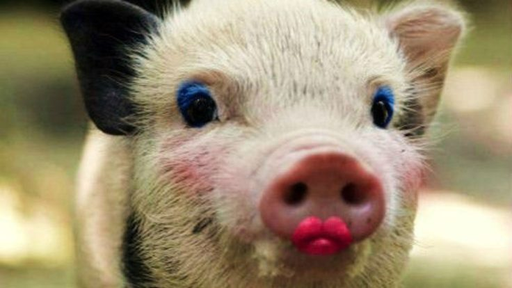 Put lipstick on a pig