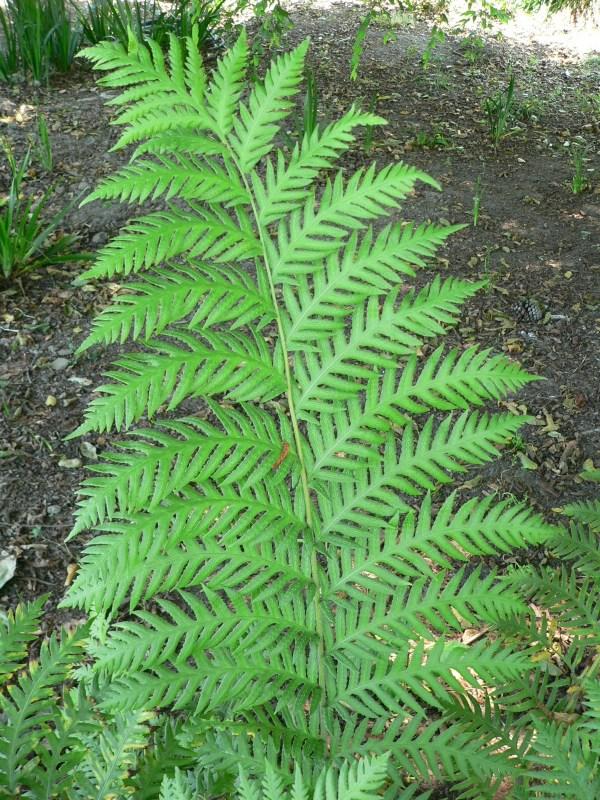 Day 3 Lake Merritt Botanical Garden . ' Patterns In