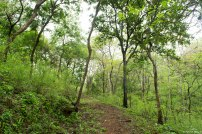 Trail up to Jhambhulmal