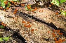 Mushrooms abound