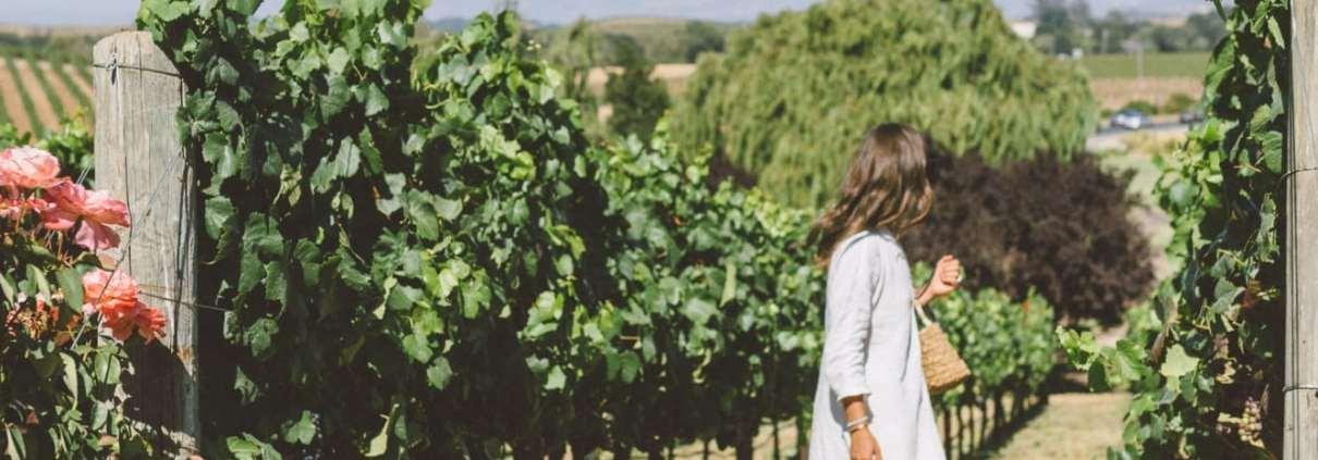 Domain Carneros Vineyards