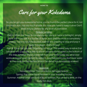A Dash of Green, Care for kokedama, Kokedama