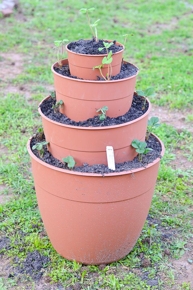 garden-update-1st-6