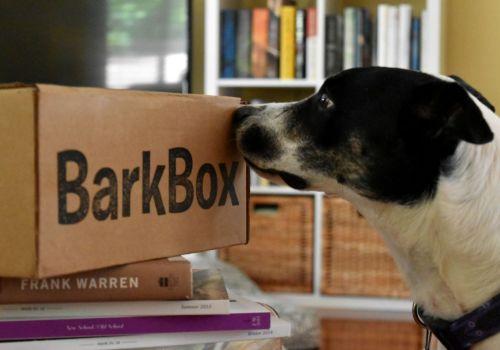 Barkbox Sniff