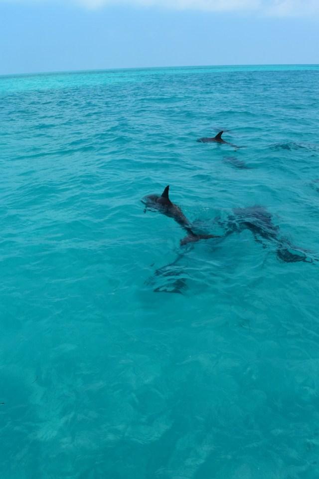 Dolphins Playground - ADOS