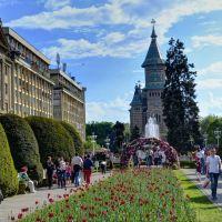 Colorful Timisoara