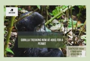 Lets Trek Gorillas