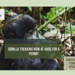 Lets Trek Gorillas