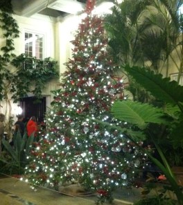 Pierre DuPont's house is decorated with this tree.
