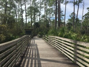 The 2.5 mile walk is made easier and more accessible for all thanks to a boardwalk. Alligators haven't ever climbed up on it, a park guide told me. I was comforted by that knowledge.