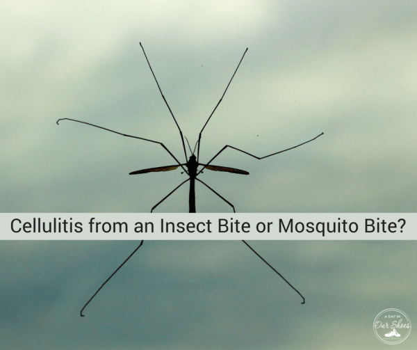 cellulitis insect mosquito bite