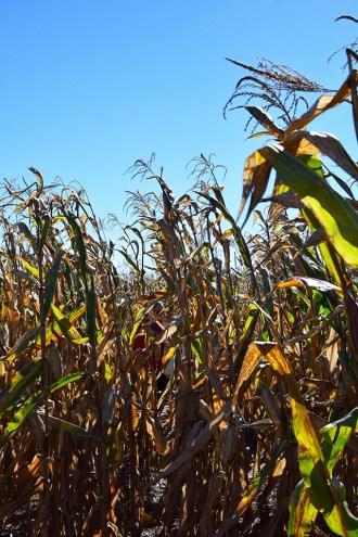 Summers Farm - Frederick, Maryland - Corn Maze - Pumpkin Patch - Fall in Maryland