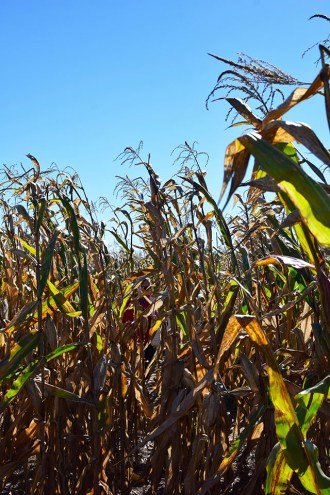 Summers Farm - Frederick, Maryland - Corn Maze - Pumpkin Patch - Fall in Maryland