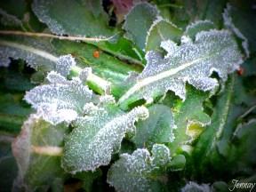 morningfrost01