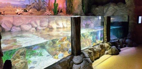 SeaLife Aquarium Arizona