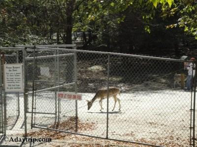 Entrance of Deer Forest