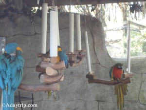 Macaws on their perches - Southwick's Zoo