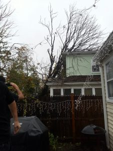 Waltham fallen tree