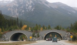 Wildlife crossing overpass on the TransCanada Highway in Banff National Park. They built this clever overpass to funnel wildlife like bear and elk for a safe crossing over the highway when Parks Canada discovered that wildlife were fearful of dark underpasses. This genius idea has significantly reduced the number of highway collisions involving wildlife.