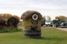 The 'hay art' along the road in Saskatchewan. This hay art depicts a Minion character from the popular Despicable Me films.