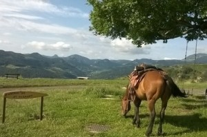horse riding in auvergne equestrian trek