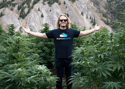 John Pufcreativ Cannabis Field