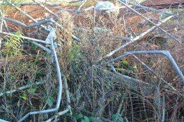glasgow-wilderness-edgelands-art-or-rubbish8