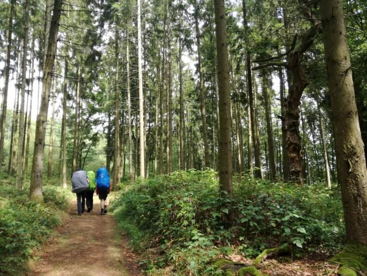 Door de bossen van Luxemburg op de Lee-trail