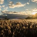 Zweden - reizen - natuur