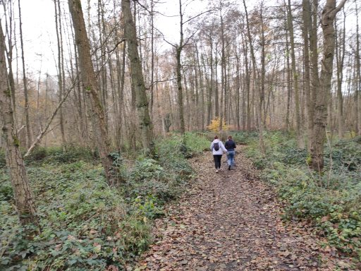 Walking in the 'Wallers Forest'